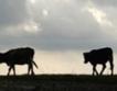 ЕС предлага стабилни цени за млякото