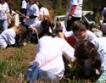 Овергаз възстановява горски площи