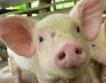 Криза, криза, свински грип