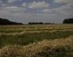 200-280 лв/дка земя при търгове за замени