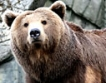 Спрейове и фотокапани срещу мечките