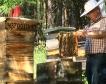 Започнаха плащанията на пчеларите