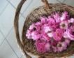 ЕК одобри 3 млн. лева за розопроизводителите