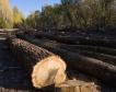 Да спре политическата чистка в горските стопанства