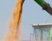 Високи добиви от житните култури в област Разград