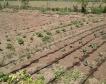 Веригите да купуват 50% български зеленчуци
