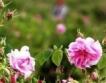 Компенсации за розопроизводители и пчелари