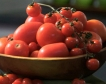 Турция отглежда домати при  -35 градуса