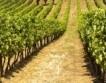По-силна реколта от грозде