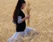 Най-добрата година за пшеницата от 2017