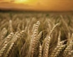 ЕС има зърнен баланс и без руска пшеница
