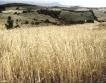 Русия може да удължи забраната за износ на зърно