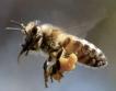 Пчелари с възможност за еврофинансиране