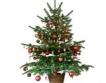 Mr. Bricolage:Купувайте живи елхи