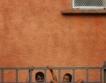 Роми строят жилища с европари