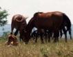 Унищожават 200 животни в село Резово