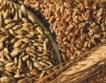 Дефицит на пшеница в световен мащаб