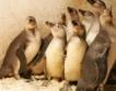 Пингвините от Софийския зоопарк