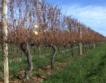 Лъч светлина за виното на Нова Зеландия
