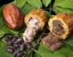 Какао: Производството в Гана 54%↑