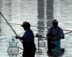 Кой съсипва риболова? Субсидиите.