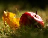 Най-голямата ябълкова градина спасена