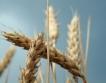 """Кооперация """"Златно зърно"""" инвестира 3 млн.лв."""