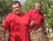 Хасково - качествено грозде и високи добиви