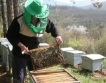 3 млрд.лв. от пчели