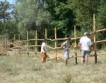 БГ диви коне се връщат в Източните Родопи