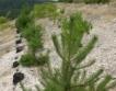 Залесяване за над 1 млн. лв.