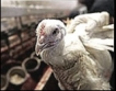 Затварят 7 птицеферми от 1 януари