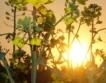 Десеторен ръст на площи с биокултури