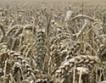 200 лв. за тон пшеница  блокира търговията