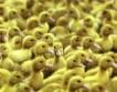 50 млн. лв. за свиневъдство и птицевъдство