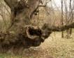 Търси се любимо дърво