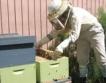 30 души заместват 1 пчела