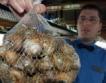 Започва изкупуването на охлюви