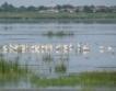 Спад на птичите популации по Дунав