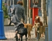 Без бездомни кучета в Благоевград