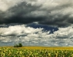 Текуща картина на българското земеделие