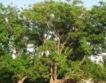 """Победителят в  """"Дърво с корен 2012"""""""