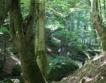 Спасението на вековните гори в България