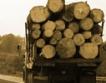 Ниската цена тласна търсенето на дървесина