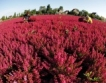 Северна България  се насочва към биоземеделие
