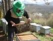 Пчели: Без пестициди от 1 декември