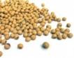 Рекордна реколта от соя