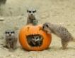 Виена: Тикви за Хелоуин в зоопарка