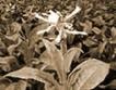 Предколеден диалог за заблуда на тютюнопроизводители