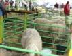 Овцевъди против проектобюджета